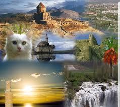 Кошки озера Ван